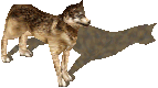 UO-Timber Wolf-kr.png